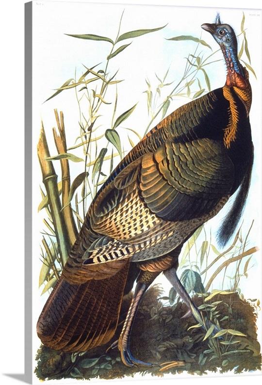 audubon big and beautiful singles Backpage seizure.