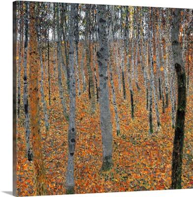 Beechwood Forest