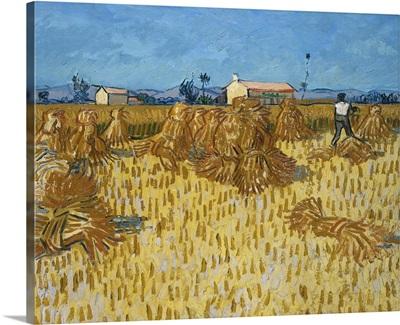 Corn Harvest In Provence, 1888