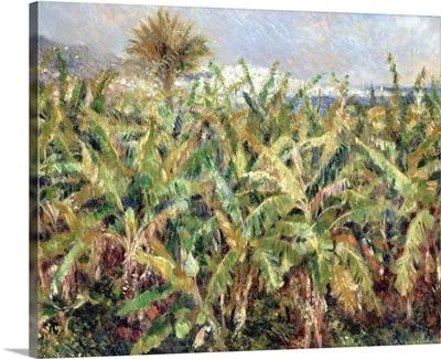 Field Of Banana Trees, 1881