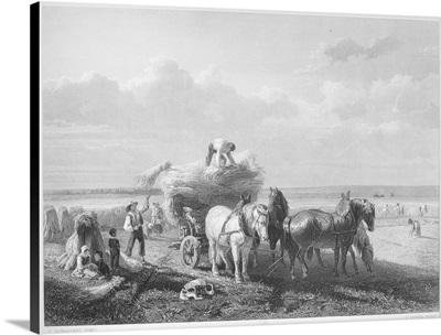 Harvesting, 19th Century
