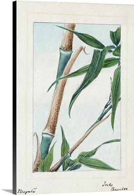 Japan, Bamboo, c1875