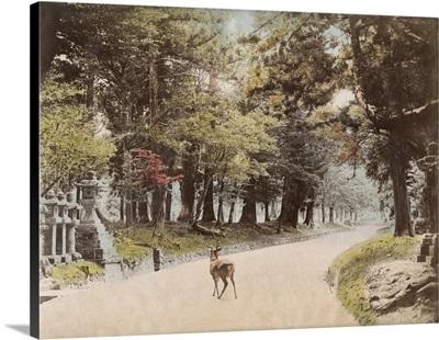 Japan, Temple, c1890