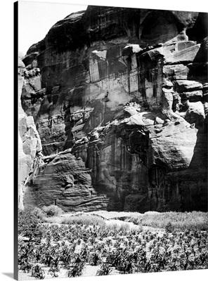 Navajo Corn Fields, c1906