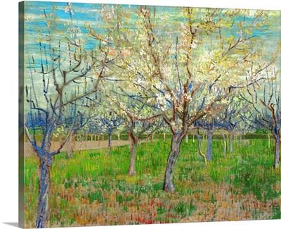Orchard, 1888