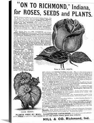 Seed Advertisement, 1889