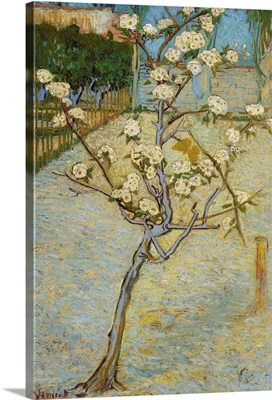 Small Peartree In Blossom, 1888