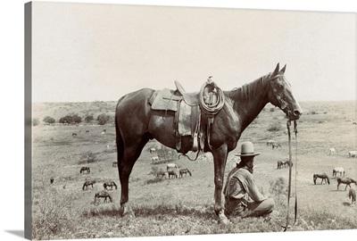 Texas, Cowboy, c1910