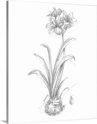 Bloom Sketches II