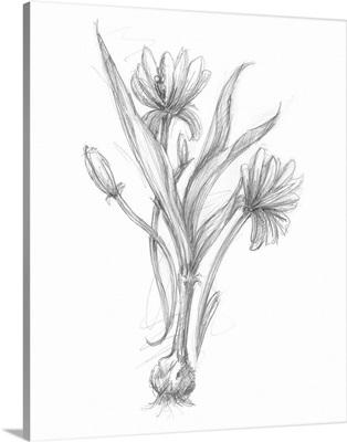 Bloom Sketches III