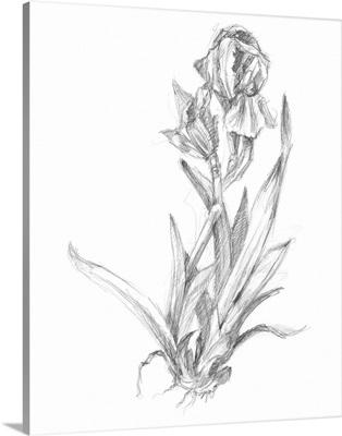 Bloom Sketches VI