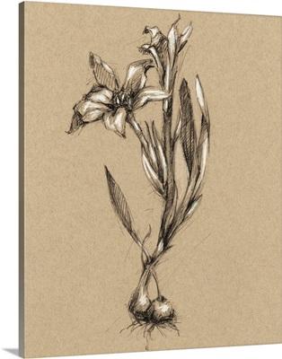 Vintage Bloom Sketches I