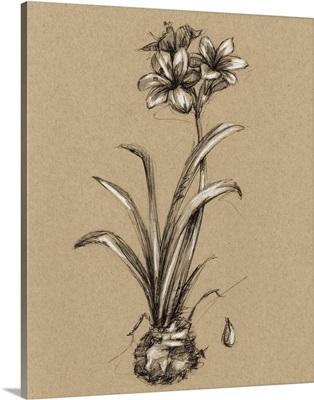 Vintage Bloom Sketches II