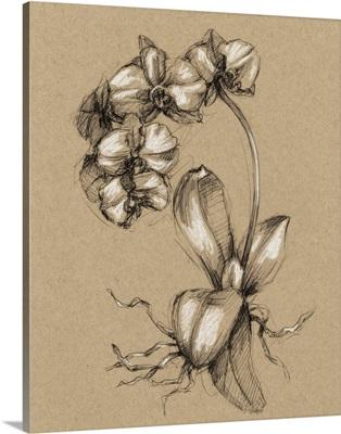 Vintage Bloom Sketches V