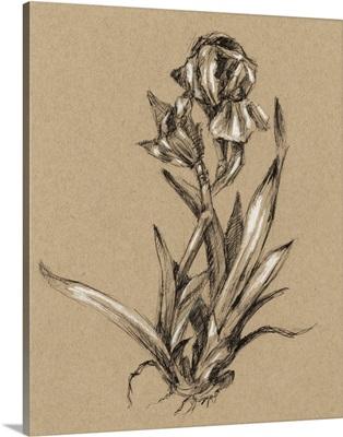 Vintage Bloom Sketches VI
