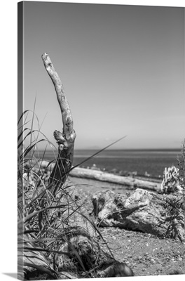Coastal Memories