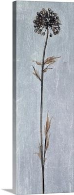 Cool Botanicals I