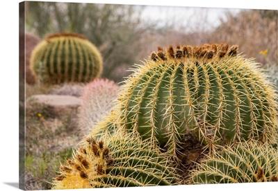 Desert Fruit II