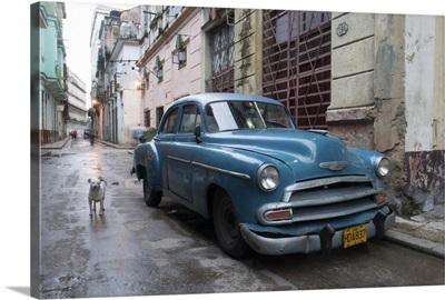 Cuba Car And Dog