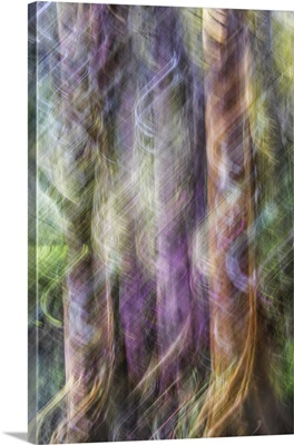 Cypress Trees Abstract