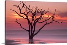 Dawn On Botany Bay
