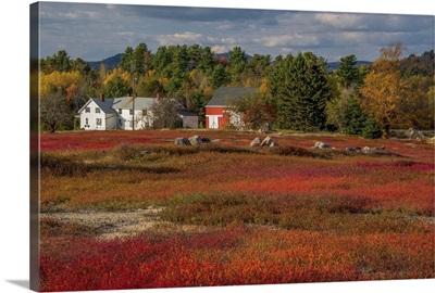 Fall Blueberry Field