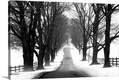 Winter Tree Lane