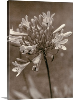 A flower in bloom