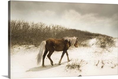 A pony on a sandy beach