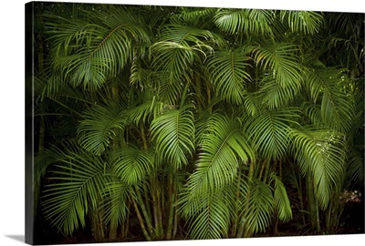 A row of green palm trees create a forest in the coasal area of the Dominican Republic