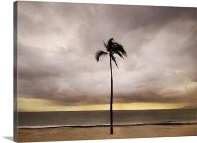 A single palm tree on a beach