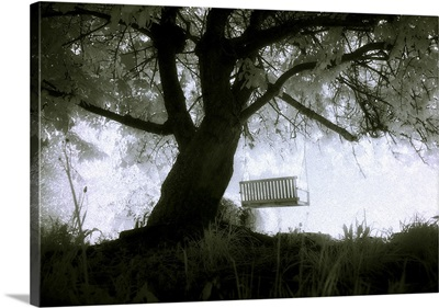 An old tree with a swing