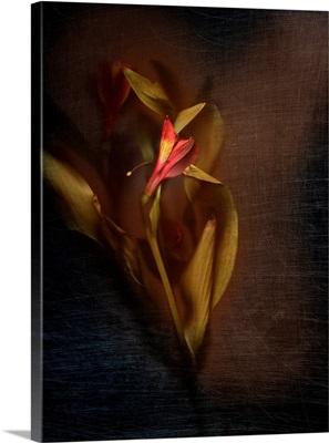 Botanical Flame