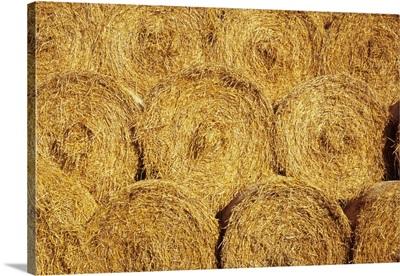 Circular bales of farmyard straw stacked in warm sunshine