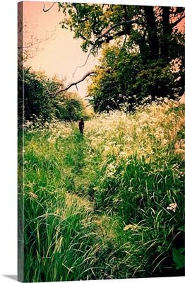 Cow Parsley Path
