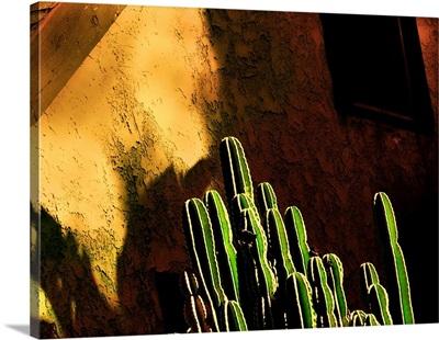 December cactus