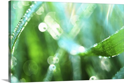 Dewy Grass II
