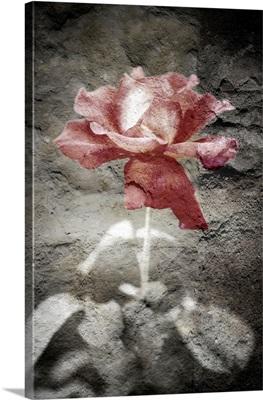 Digital composite of a rose
