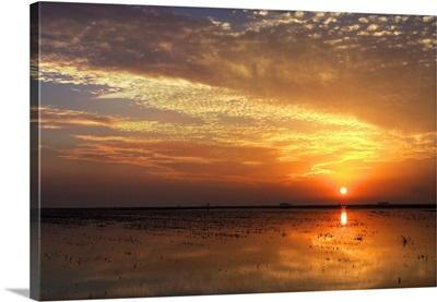 Dramatic sunset on a harvested rice field, Doana marshland area, Isla Mayor, Spain