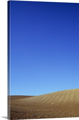 Field of browning cereal stubble on gently rolling hills, Lincolnshire Wolds, England