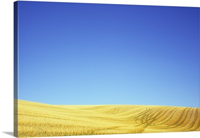 Field of cereal stubble criss-crossed by tracks on hill, Lincolnshire Wolds, England