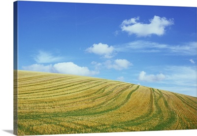 Field of cereal stubble crossed by tracks with grass growth, Lincolnshire Wolds, England