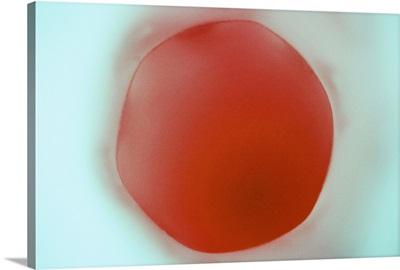 Glass Abstract XVIII