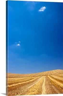 Harvested field, Spain