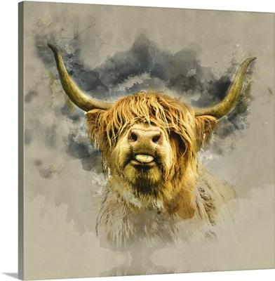 Highland Cattle 6