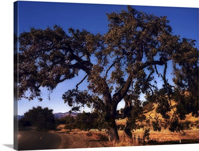 Lonesome Tree or Tribute to Maxfield Parrish