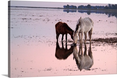 Mare and colt grazing freely in Donana marshland, Spain