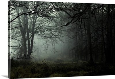 Misty dawn in the New Forest, Hampshire, England