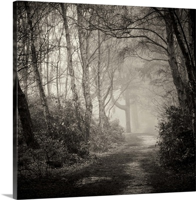Path through forest with mist