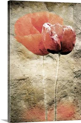 Poppies